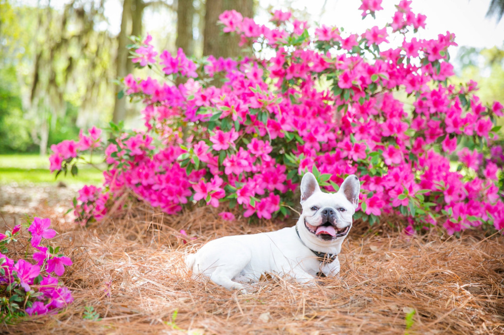 Boone-Hall-Pet-Portraits_0004