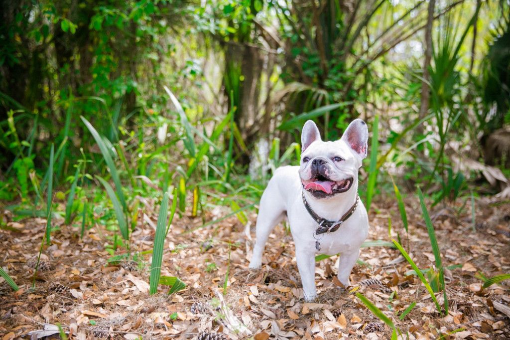 Boone-Hall-Pet-Portraits_0006