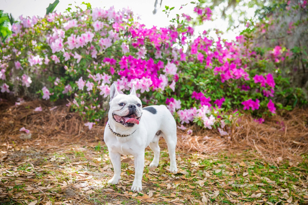 Boone-Hall-Pet-Portraits_0013