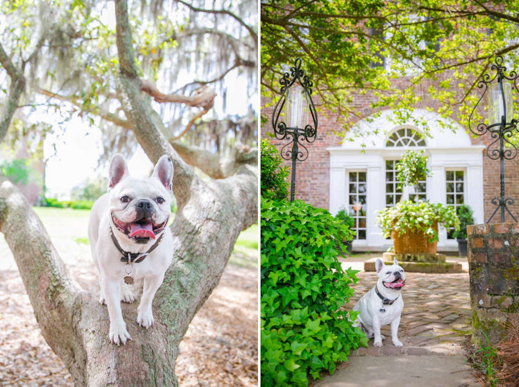 Boone-Hall-Pet-Portraits_0015
