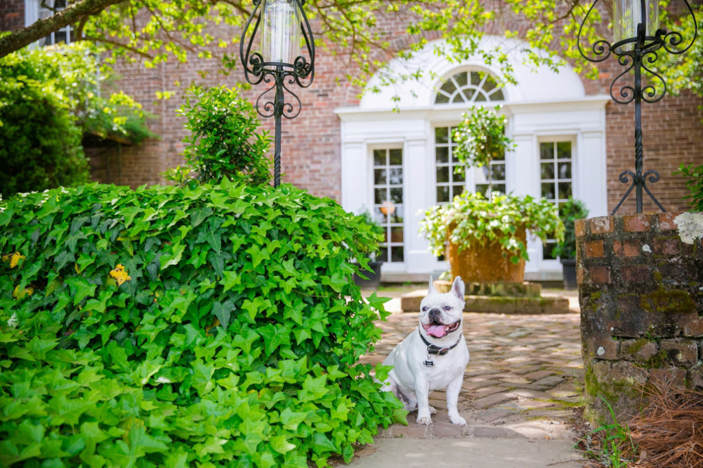 Boone-Hall-Pet-Portraits_0016