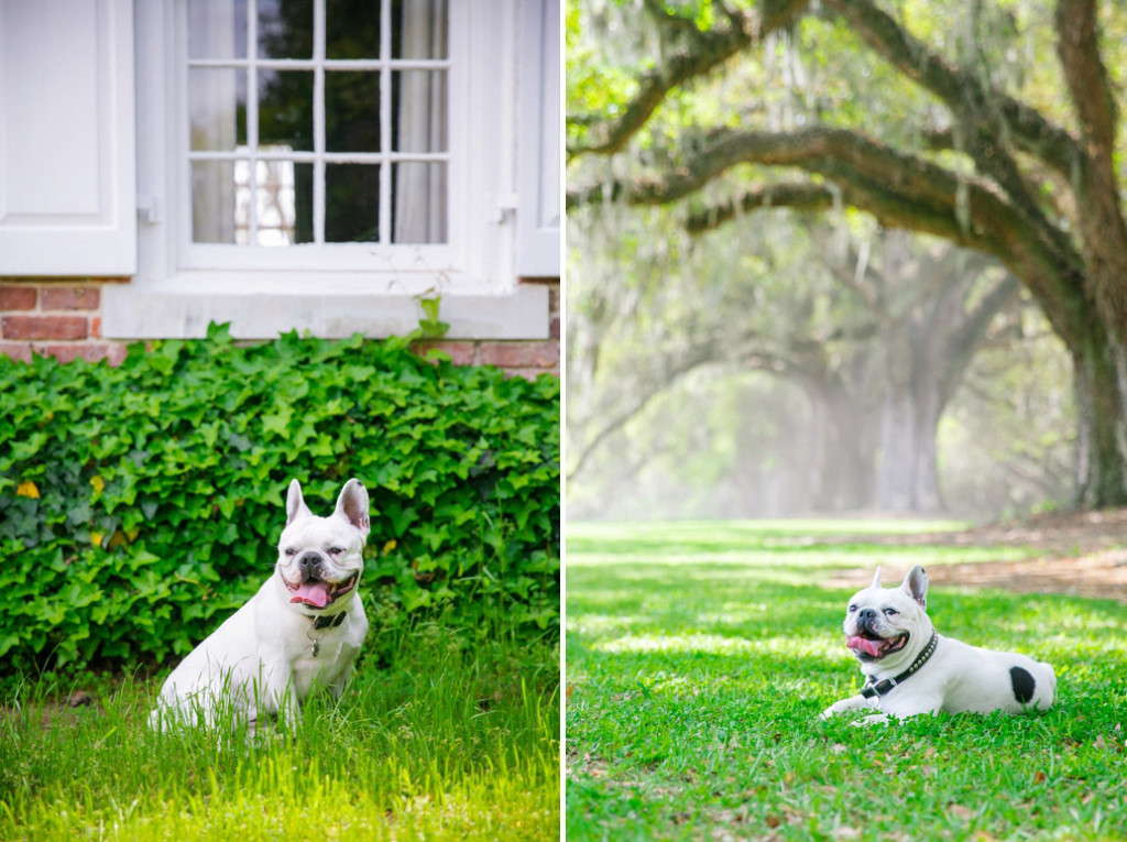 Boone-Hall-Pet-Portraits_0019
