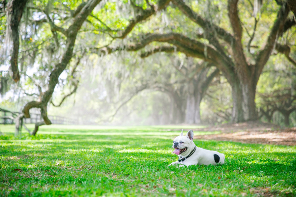 Boone-Hall-Pet-Portraits_0020