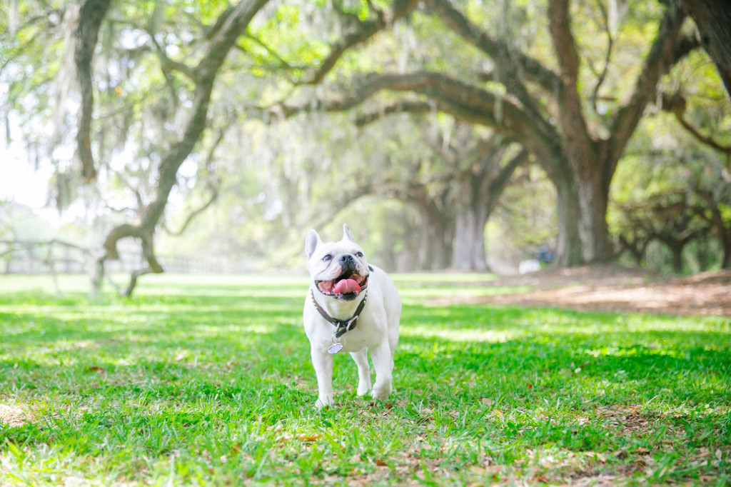 Boone-Hall-Pet-Portraits_0021
