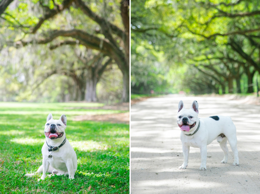 Boone-Hall-Pet-Portraits_0022