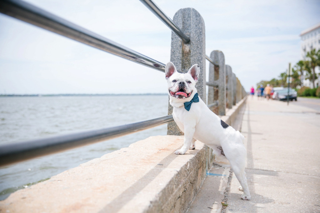 Boone-Hall-Pet-Portraits_0030