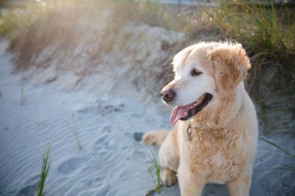 Folly-Beach-Pet-Portraits_0016