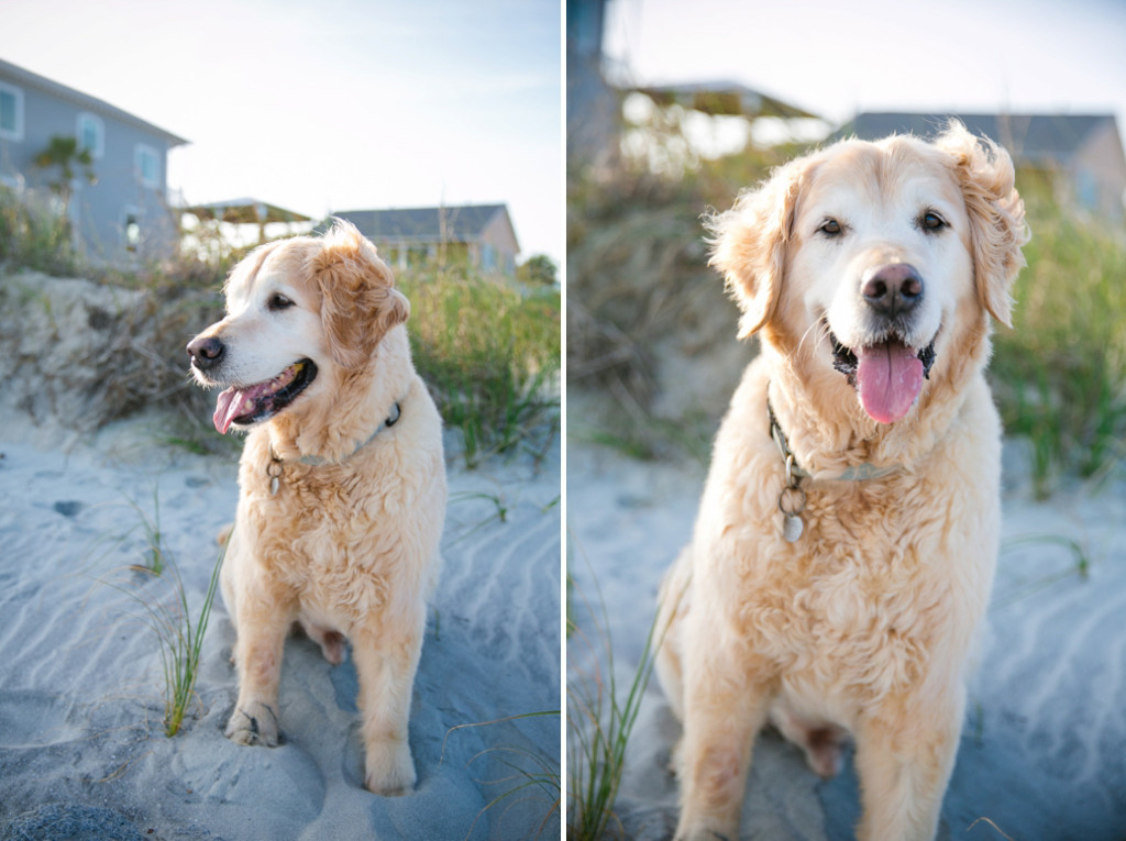 Folly-Beach-Pet-Portraits_0017