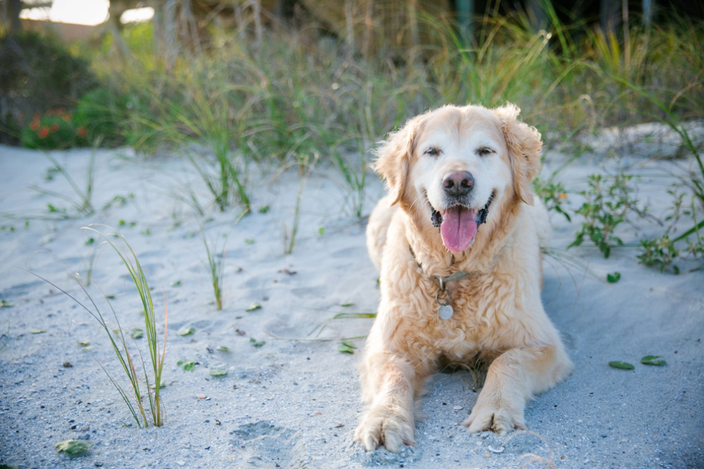 Folly-Beach-Pet-Portraits_0020