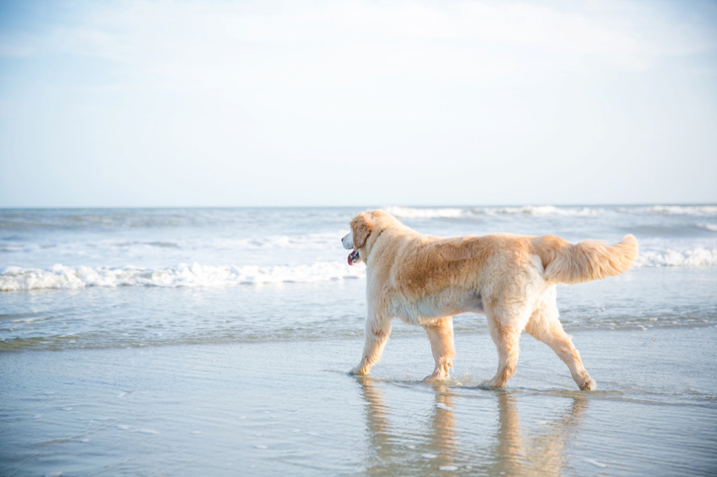 Folly-Beach-Pet-Portraits_0022