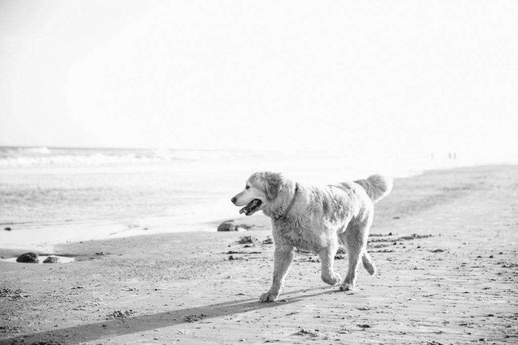 Folly-Beach-Pet-Portraits_0024