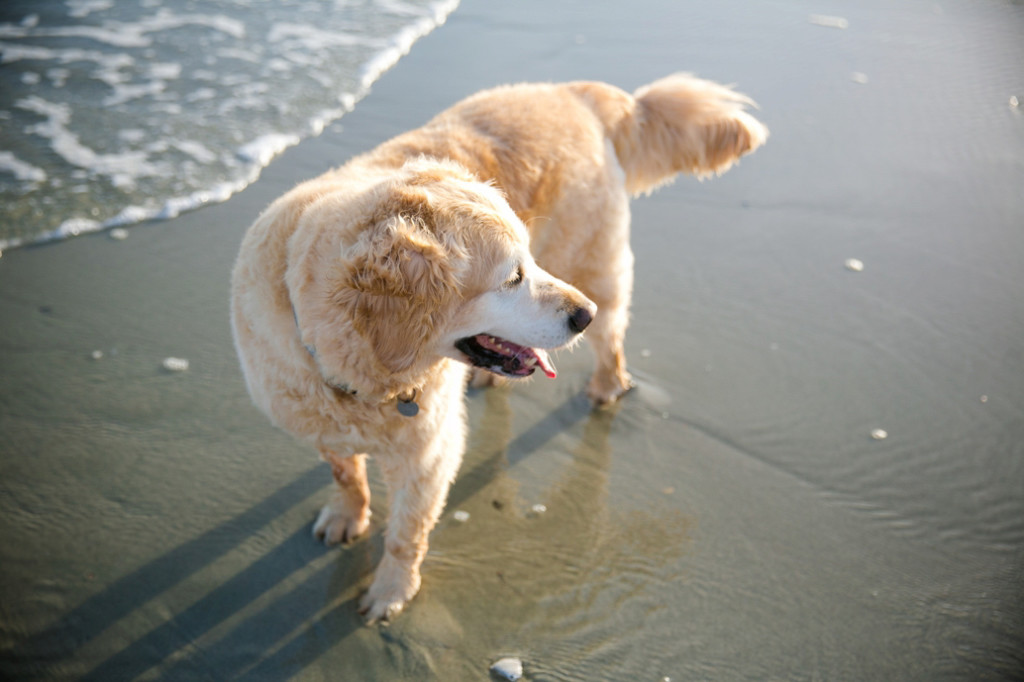 Folly-Beach-Pet-Portraits_0026