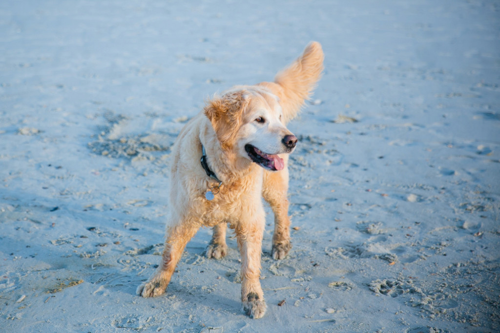 Folly-Beach-Pet-Portraits_0034