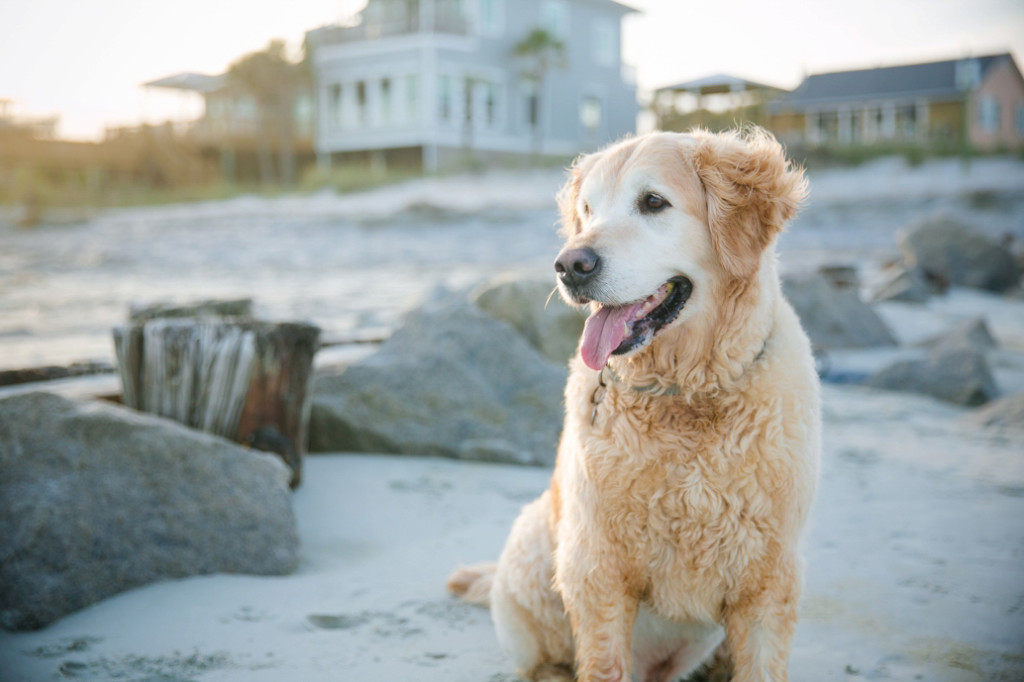 Folly-Beach-Pet-Portraits_0035