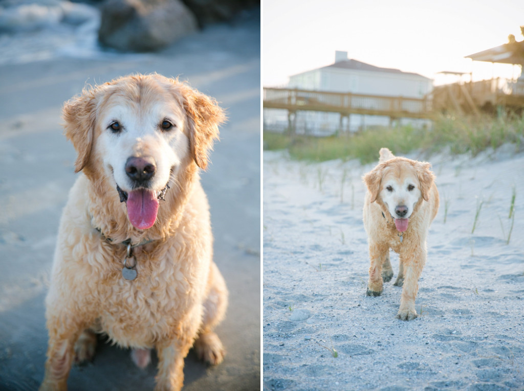 Folly-Beach-Pet-Portraits_0036