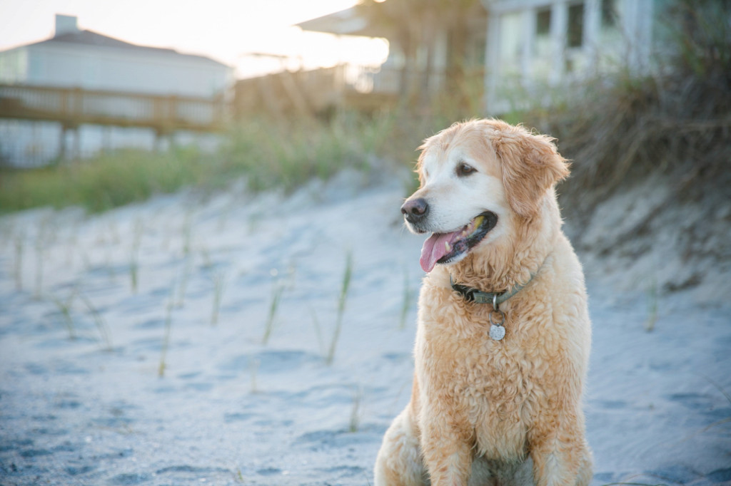 Folly-Beach-Pet-Portraits_0040